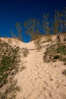 Springtime Comes to the Dunes