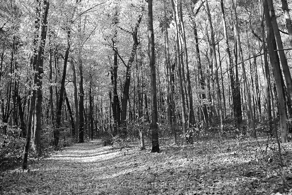 A Walk in the Woods BW